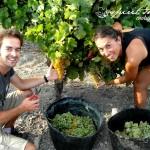 vendimia con nosotros, experiencias enoturismo Jerez, turismo para todos Spirit Sherry (7)