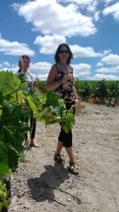 Fiestas de la vendimia Jerez 2014 visita a la viña spirit sherry enoturismo turismo andalucia algo diferente cadiz