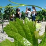 Fiestas de la vendimia Jerez 2014 visita a la viña spirit sherry enoturismo turismo andalucia algo diferente cadiz (5)