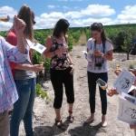 Fiestas de la vendimia Jerez 2014 visita a la viña spirit sherry enoturismo turismo andalucia algo diferente cadiz (6)