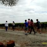 Enoturismo rural vinso de JErez Viñas Andalucia Cadiz Spain