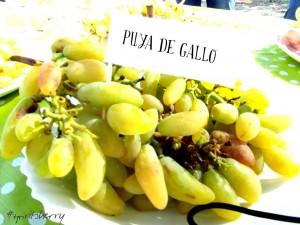 Cata de uvas marco de jerez enoturismo rural visitas viña sherry wine tour wines experiencias learns to wine (2)