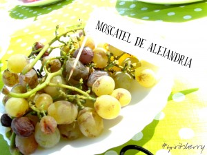 Cata de uvas marco de jerez enoturismo rural visitas viña sherry wine tour wines experiencias learns to wine 2