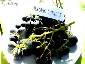 Cata de uvas marco de jerez enoturismo rural visitas viña sherry wine tour wines experiencias learns to wine 4