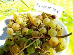 Cata de uvas marco de jerez enoturismo rural visitas viña sherry wine tour wines experiencias learns to wine 6 fiestas de la vendimia que hacer