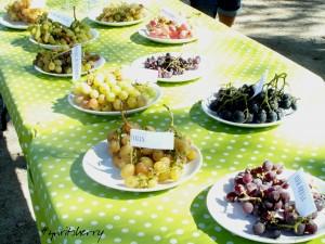 Cata de uvas marco de jerez enoturismo rural visitas viña sherry wine tour wines experiencias learns to wine 8 fiestas de la vendimia