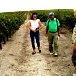 Destino Jerez, Turismo vino