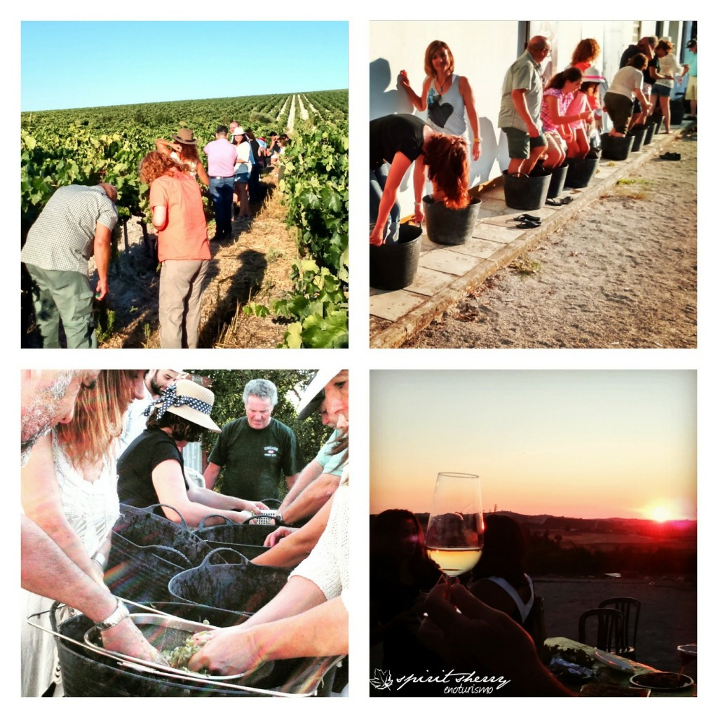 Harvest Us, harvest sherry triangle, experience