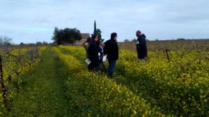 Sherry Experience Visita a Viñas Marco de Jerez