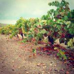 Bodegas Jerez Visitas a viña, PLANES CÁDIZ