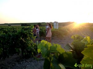 Sherry Sunset, Vineyard experience Jerez d ela Frontera, Winery