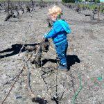 children Tour Visit Vineyard family day traveel